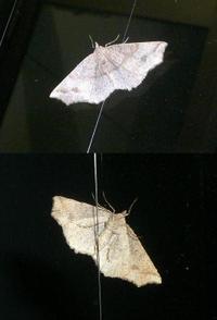 Moth4_1